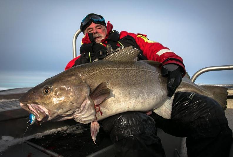 The biggest Soroya Cod fishing report norway