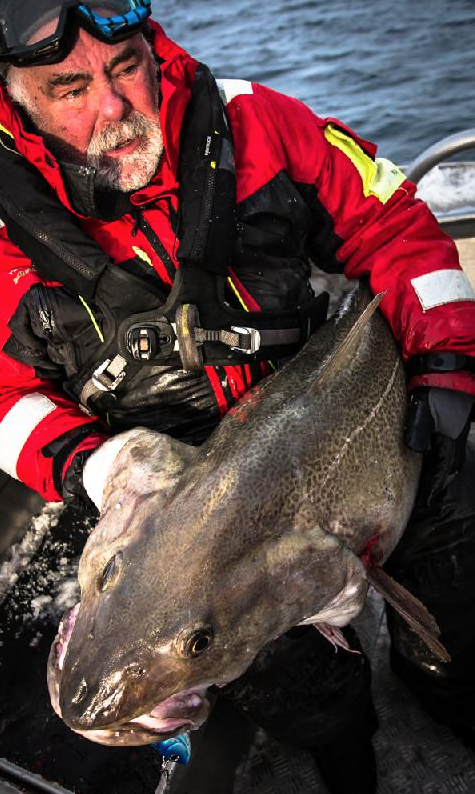That Cod is massive fishing report norway from Soroya