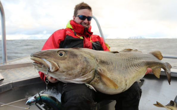 Norway fishing report of an 80LB Cod caught from Soroya