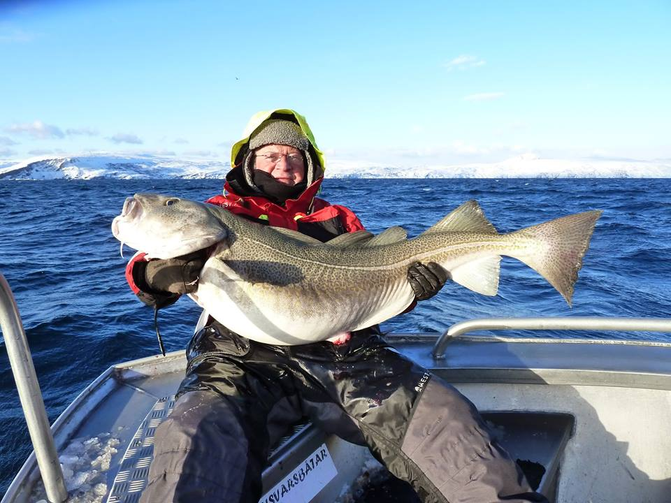 Huge Norwegian Skrei Cod Fishing Report Norway