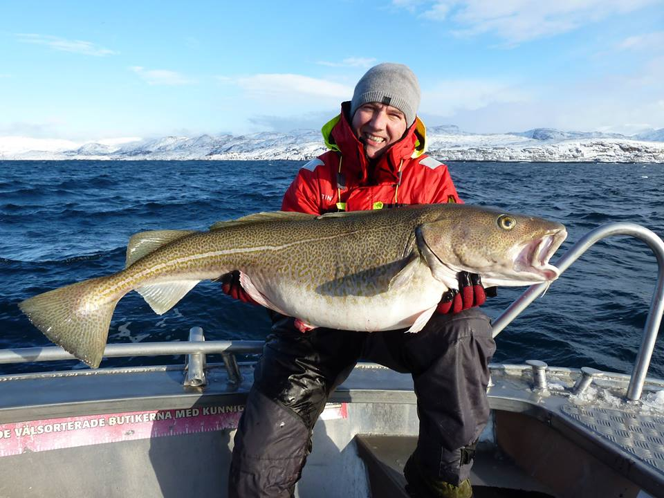 Live Fishing Report Norway with huge Cod