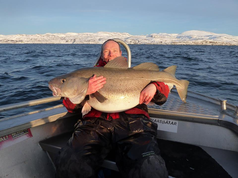 The biggest of the day a 34Kilo Cod Fishing Report Norway Soroya