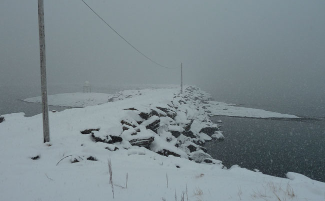 Snowy seen on Soroya Fishing report Norway