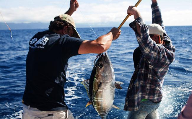 Azores Fishing Report plenty of tuna around