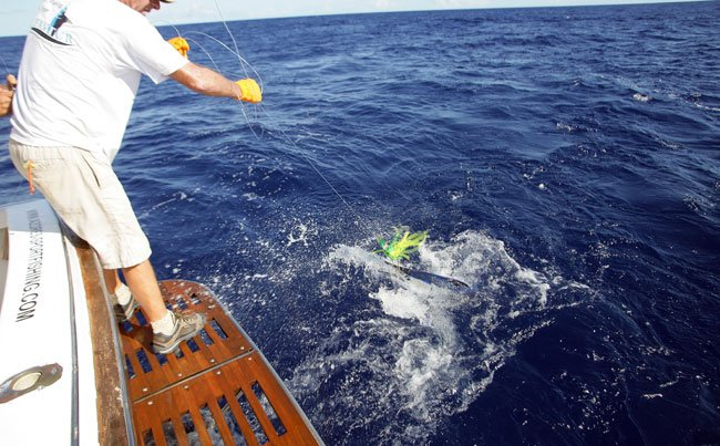 Little white Marlin Azores Fishing Report