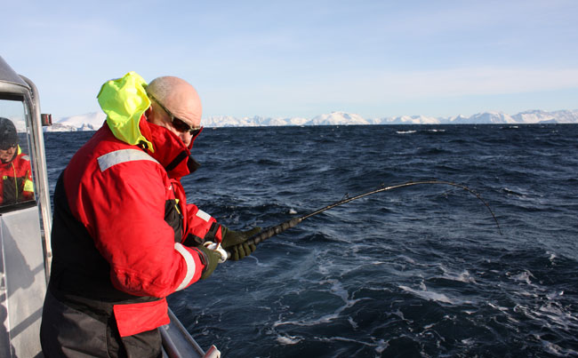 Fishing report Norway for huge Cod