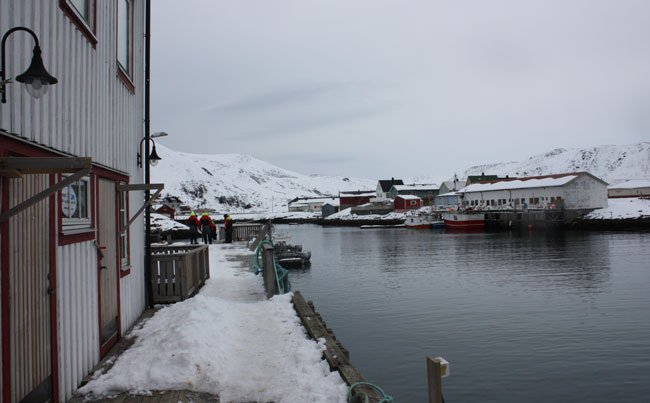 Soroya Fishing report Norway of the main Harbour