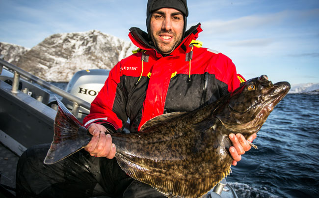 Halibut caught from Fishing report Norway in Soroya