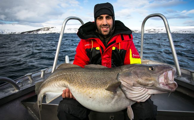 Fishing report Norway does it again with a big cod