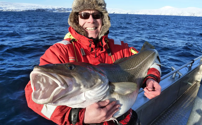 Mathew is loving all these cod Fishing report Norway he keeps coming back