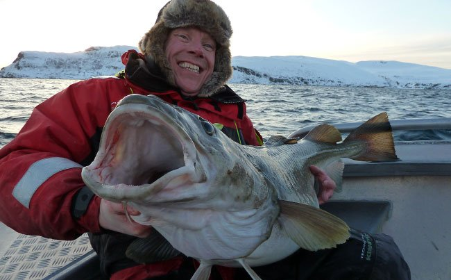 Fishing report Norway on how to catch these cod