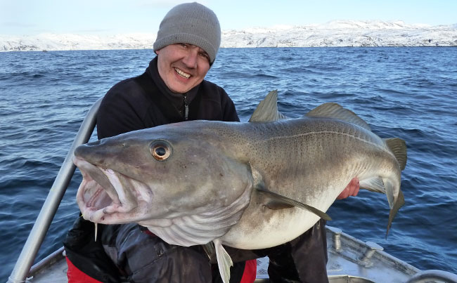 Paul Stevens with a huge Cod from Soroya Fishing report Norway