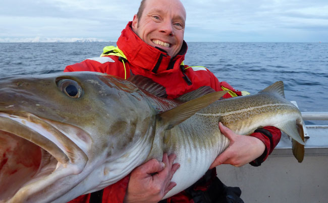 Look at the length of that Cod Fishing report Norway Its massive