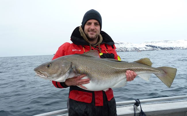 Cod Fishing report Norway with huge Cod