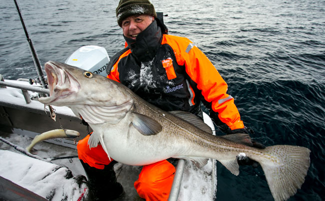 This 35kilo Cod was his biggest of the week on my Norway Fishing Report from Soroya