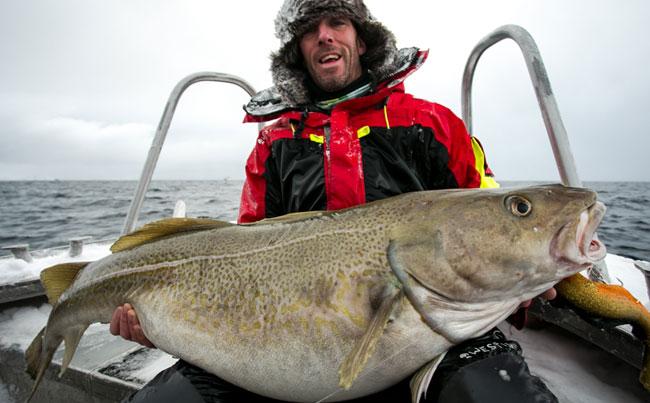 Giant Norway Cod eats Lure Norway Fishing Report