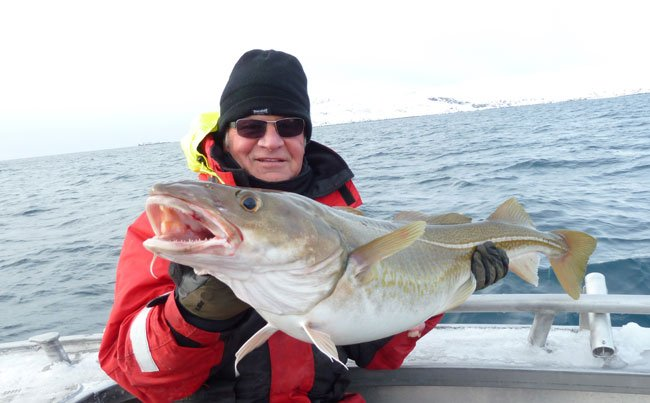 Just a small Cod Norway Fishing Report