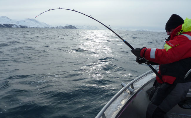 Man with a bend in his rod for my Norway Fishing Report