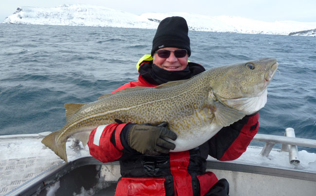 What a lovely big cod Norway Fishing Report