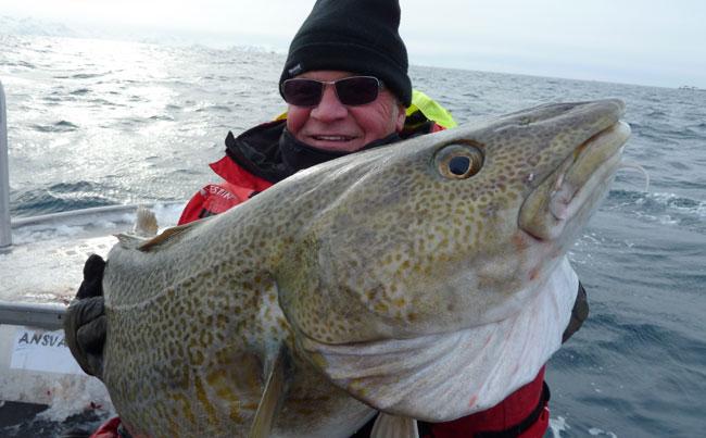 Soroya_World_Record_Cod_Skrei_North_Norway__0023