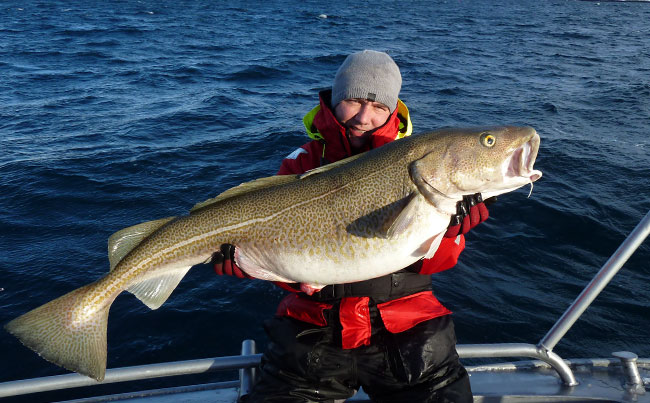 What an amazing place Soroya is Norway Fishing Report