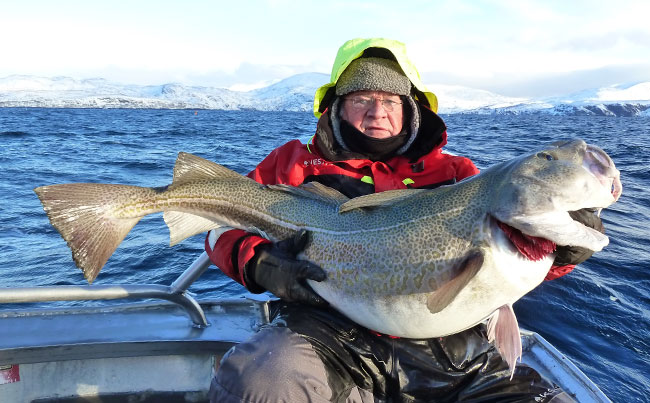 Man holding a 60Lb Cod in Norway Fishing Report