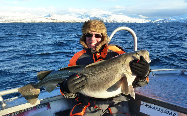 These huge Cod are there in their millions Norway Fishing Report