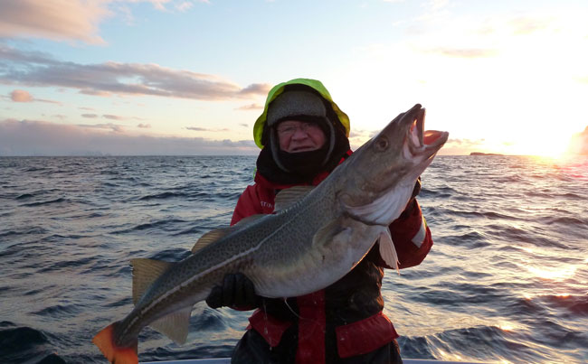 A lovely sunset from Soroya Norway Fishing Report