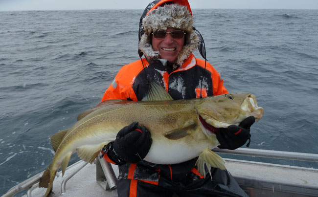 Yet another great shot of cold man holding a big Cod Norway Fishing Report