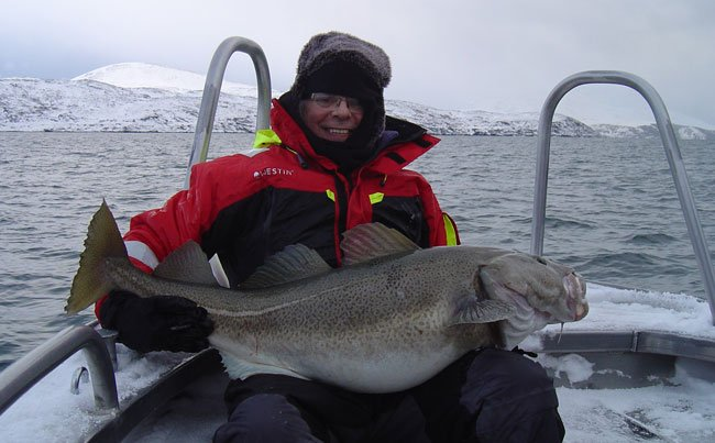 Snow covered boat with big Cod Norway Fishing Report