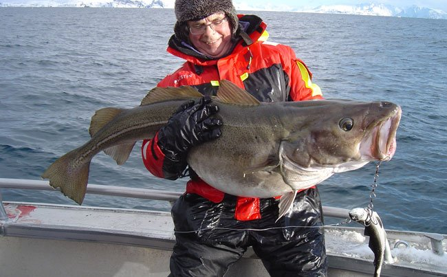 Norway Fishing Report from Soroya with Skrei Cod