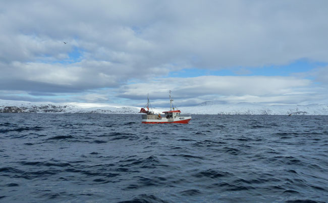 Local Norway Fishing Report from local boats