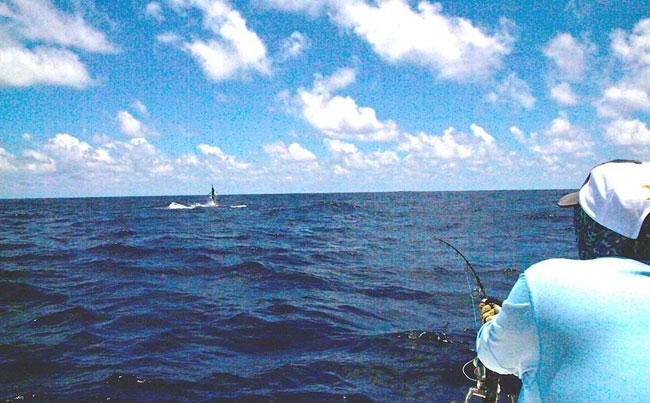 Fishing Report Sri Lanka Marlin jumping in distance