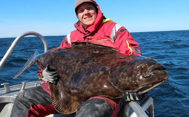 Lofoten Norway Fishing report on Halibut fishing