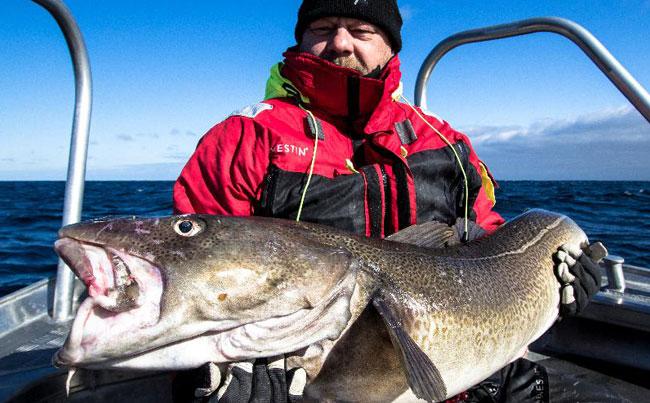 Huge Norwegian Cod Norway Fishing report