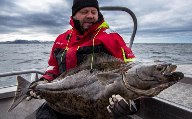 Norway Fishing report on Halibut fishing