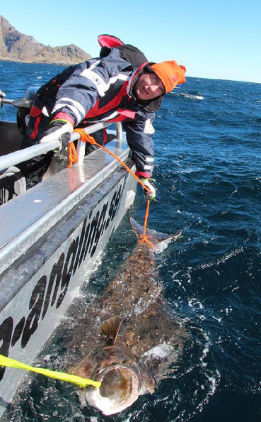 Norway Fishing report on tagged and released fishes