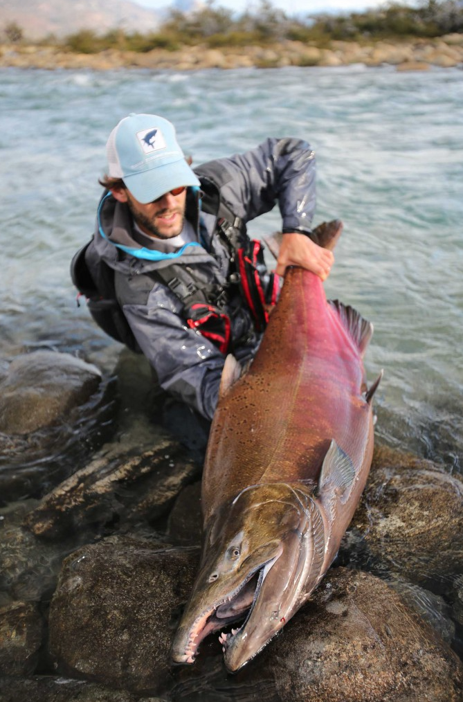 a monster King Salmon Argentina