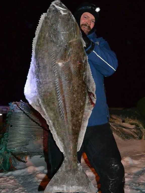 Fishing Report Norway of a huge Halibut caught off the shore
