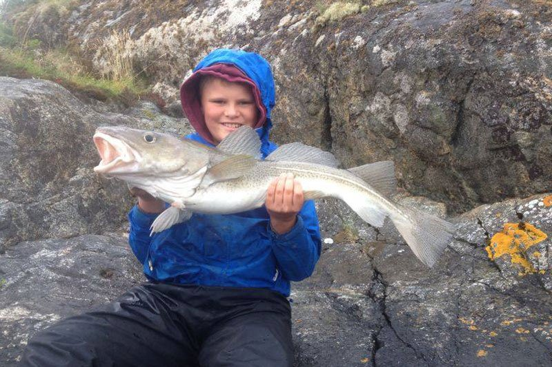 Cod from the shores of norway in our Fishing Report Norway