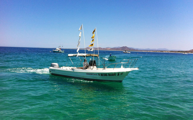 The smaller inshore boats we use Mexico Fishing Report