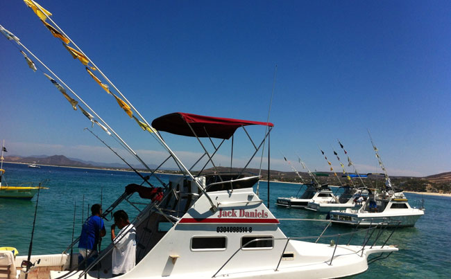 Flying flags for the species they have caught Mexico Fishing Report