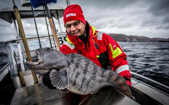 Wolfish Norway Fishing Report