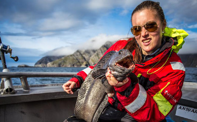 Lady with big Wolfish Norway Fishing Report