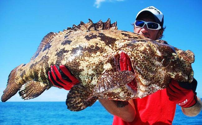Grouper on a popper rod Sri Lanka Fishing Report