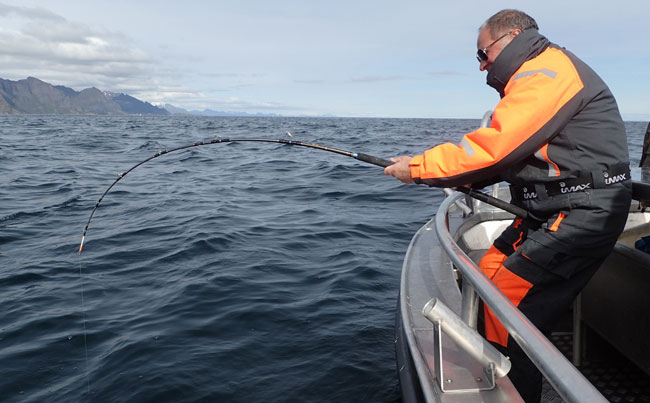 Angler playing huge Halibut in our Fishing Report Norway