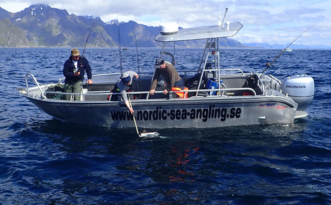 yet another halibut Fishing Report Norway