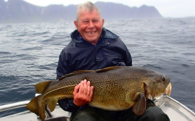The marks on this Cod looks like its been painted Fishing Report Norway