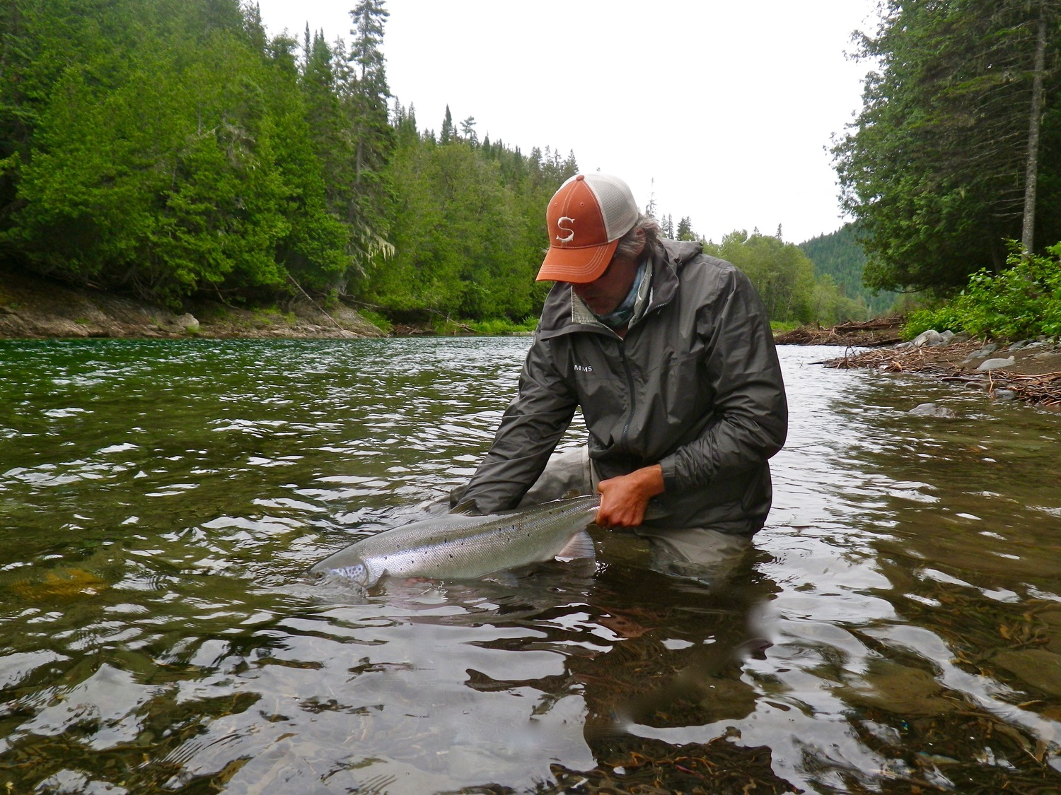 Releasing a nice Atlantic Salmon happy angler and our Salmon Fishing Report