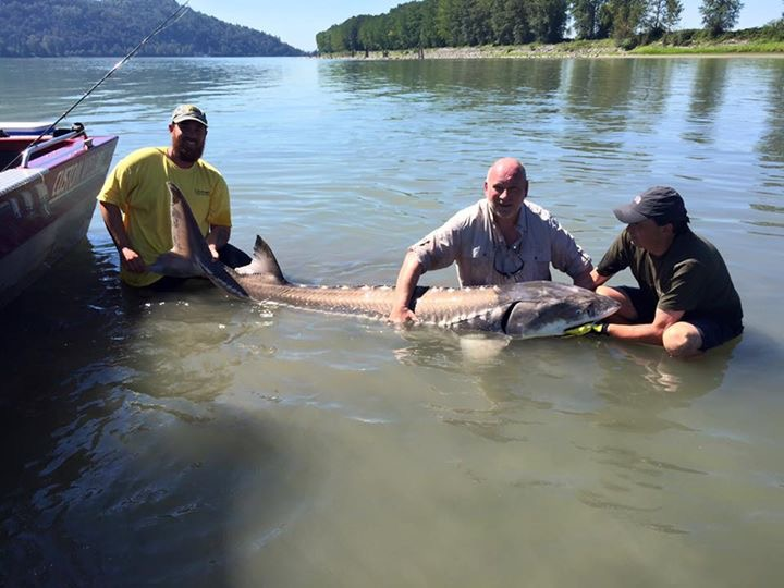 His biggest Sturgeon of the trip Fishing Report Canada